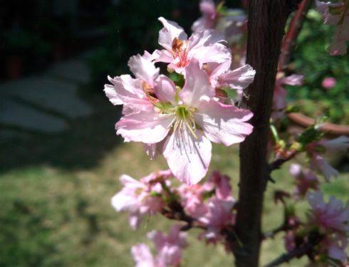 中庭盛開的美麗花朵