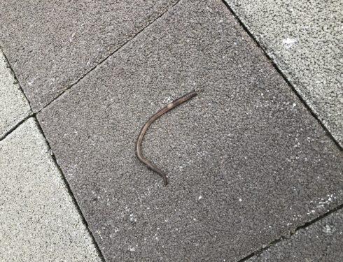 人生第一次看到蚯蚓…