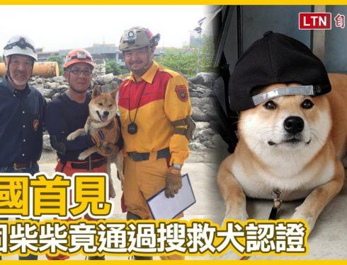 頑固柴柴居然通過「國際搜救犬認證」!